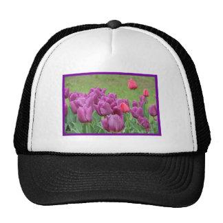Floraciones hermosas de las flores púrpuras de los gorros