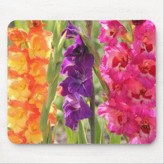 Floraciones hermosas del gladiolo alfombrilla de ratones