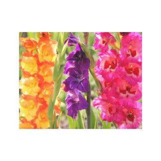 Floraciones hermosas del gladiolo lona envuelta para galerias