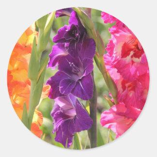 Floraciones hermosas del gladiolo pegatina redonda