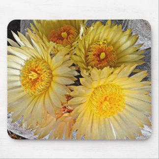 Floraciones invertebradas hermosas del cactus de l alfombrillas de ratones