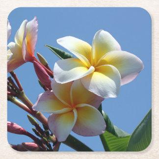 Floraciones llamativas del Frangipani del Plumeria Posavasos De Cartón Cuadrado