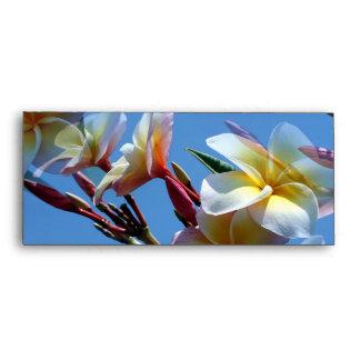 Floraciones llamativas del Frangipani del Plumeria Sobre