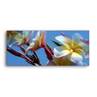 Floraciones llamativas del Frangipani del Plumeria Sobres