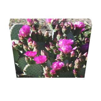 Floraciones magentas Microdaisis del cactus del Impresión En Lienzo