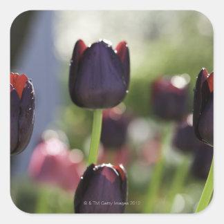 Floraciones marrón-negras aterciopeladas, calcomanías cuadradass personalizadas