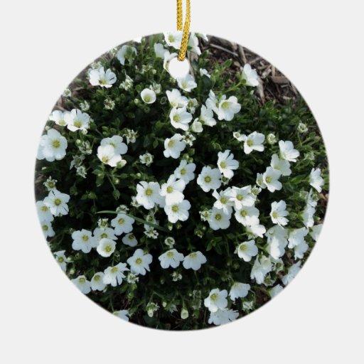 Floraciones Ornamento De Reyes Magos