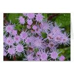 Floraciones púrpuras