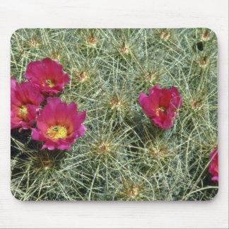 Floraciones rojas en las flores del cactus alfombrilla de ratones