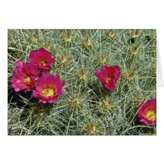 Floraciones rojas en las flores del cactus tarjeton