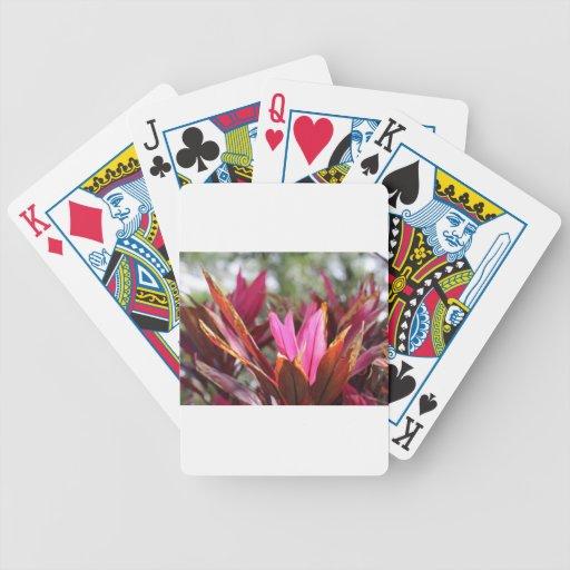 floraciones rosadas barajas de cartas
