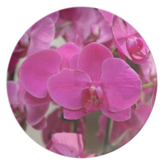 Floraciones rosadas de la orquídea plato de cena