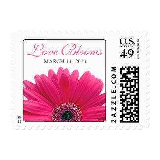 Floraciones rosadas del amor de la margarita del envio