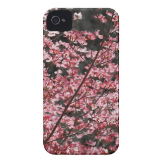 Floraciones rosadas del Dogwood iPhone 4 Carcasas
