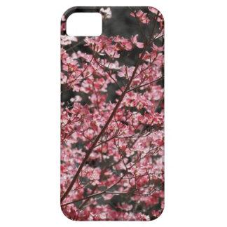 Floraciones rosadas del Dogwood iPhone 5 Carcasas