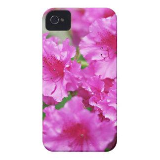 Floraciones rosadas del rododendro de la primavera iPhone 4 Case-Mate protectores