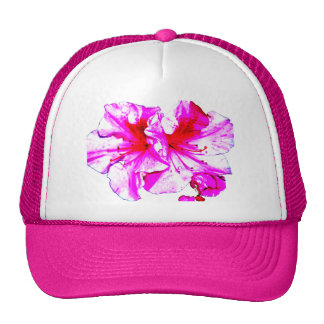 Floraciones rosadas dobles de la azalea del chapot gorras