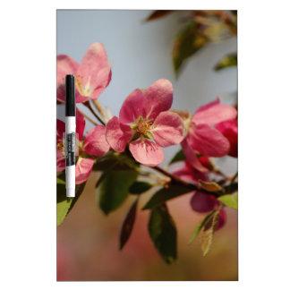 Floraciones rosadas tableros blancos