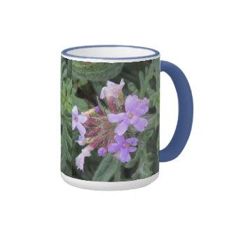 Floraciones salvajes de la verbena taza de dos colores