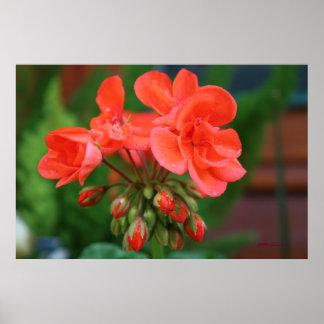 Floraciones y brotes impresiones