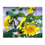 Floraciones y mariposas - cola del trago postal