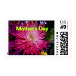 Floral 2010 025 Chrysanthemum The MUSEUM Zazzle Gi Stamp