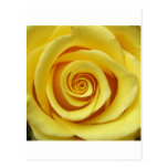 Floral amarillo tarjeta postal