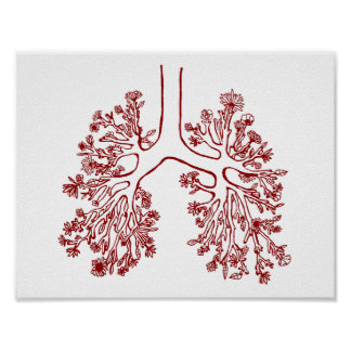 Floral Anatomical Lungs Illustration Poster