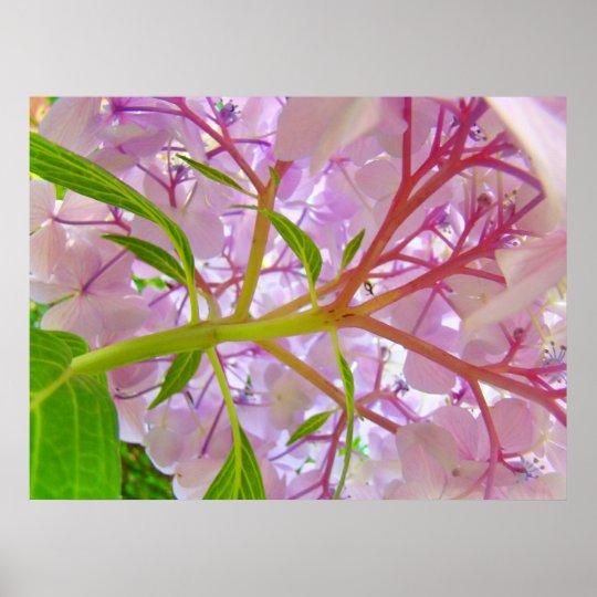 Floral art prints Pink Hydrangea Flower artwork