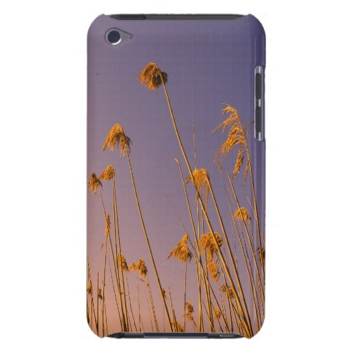 floral barely there iPod fundas