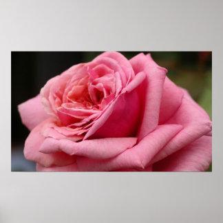 Floral bonito color de rosa rosado póster