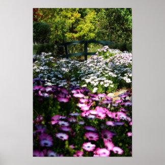 """Floral Bridge"", African Daisies Posters"