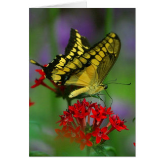 Floral Butterfly Card