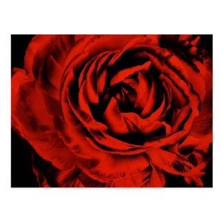Floral colorido del ranúnculo del primer rojo de postales