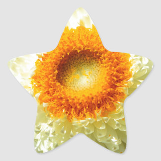 Floral Colour Star Sticker