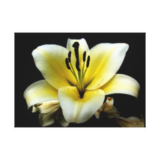 Floral Custom 24 X 18 Canvas Stretched Canvas Prints