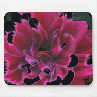 Floral dahlia in deep reds accented in black mouse pad