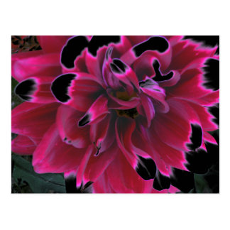 Floral dahlia in deep reds accented in black postcard