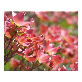 Floral Fine art Photography Pink Dogwood Flowers Photo Art