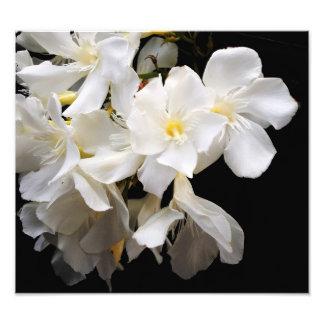 floral fotografía