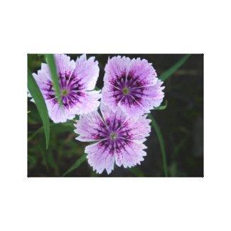 Floral Freaks 62