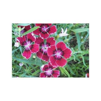 Floral Freaks 64