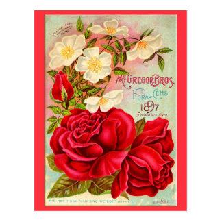 Floral Gems Postcard