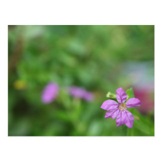 Floral green background small purple flower postcard