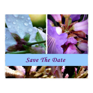Floral in Blue Save the Date Postcard