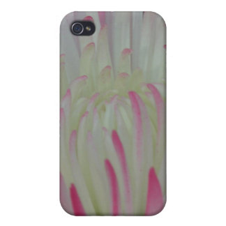 Floral iPhone 4/4S Case