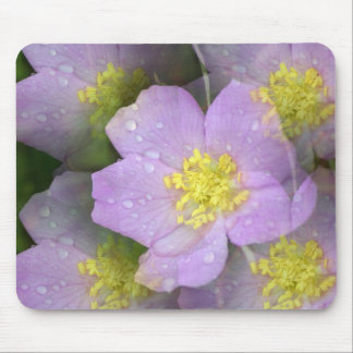 Floral Kalidascope Mouse Pad