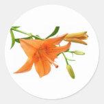Floral - lirio pegatina redonda