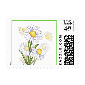 Floral Love White Daisy Flower Postage Stamps