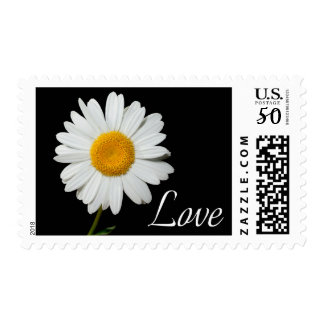 Floral Love Yellow And White Daisy Flower Black Postage